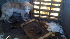 · Petition The dogs of the kennel Patti are dying of starvation · Change.org