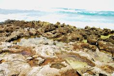 Tide Pools by Turtle Bay SEIS, via Flickr Turtle Bay Resort, North Shore Oahu, Tide Pools, Vacation, Water, Outdoor, Gripe Water, Outdoors, Vacations