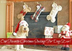 Our Favorite Christmas Stockings For Dogs Ever! | mygbgvlife | Bloglovin'