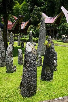 megalithic statues in Lore Lindu National Park, Central Sulawesi, Indonesia  Sulawesi