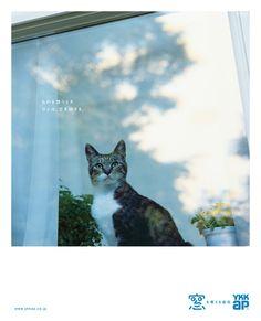 「もの想い」篇 ものを想うとき、ひとは、空を欲する。 雑誌・新聞広告 | YKK AP株式会社 http://www.ykkap.co.jp/company/ad/magazine_company.asp