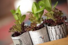 DIY Recycled container garden video tutorial.  Simple ideas and easy to follow.  Get started now on these projects at home.  Maybe with your kids too!
