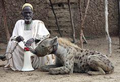 Meet The Hyena Men Of Nigeria (pictures) - Pets - Nigeria Hyena Man, Photo Choc, Comic Cat, World Press Photo, Animal Society, African Tribes, Baboon, Wild Dogs, Tier Fotos