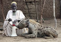 A man posed Friday with a hyena on a leash in Rinka village, of Nigeria's Katsina state. Entertainers train hyenas and baboons for their performances. (Akinleye/Reuters)