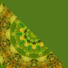 leaves1split by craftysue2, via Flickr