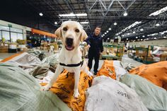 Canines Help Stop Wildlife Crime,reports WWF. Sniffer dogs—with their remarkable sense of smell—are increasingly part of a global effort to intercept illegal wildlife and wildlife products like ivory, rhino horns, sea turtles and pangolins smuggled through airports, shipping ports and public transpor