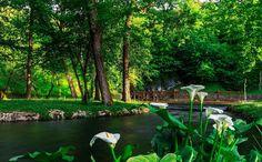 Białe kalie i most nad rzeką w parku Park, Garden, Plants, Garten, Lawn And Garden, Parks, Gardens, Plant, Gardening