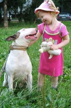 Bull Terrier and a little girl.