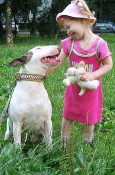 Bull Terrier and a little girl.