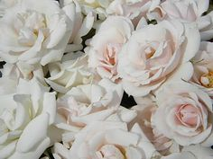 Last night I met with Emma, one of my brides who will be getting married in March. We were discussing different types of flowers that might . Pretty Flowers, Fresh Flowers, White Flowers, Rose Wedding, Wedding Flowers, Different Types Of Flowers, Carla Brown, Rose Varieties, Spray Roses