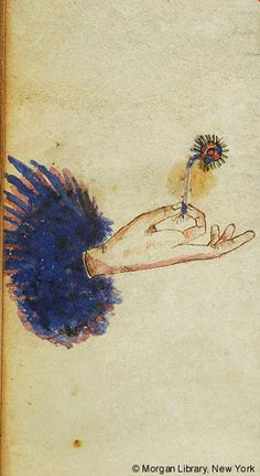 Hand, holding flower (?) between thumb and index finger | Libro degli uomini famosi | Italy, Venice | ca. 1405 | The Morgan Library & Museum