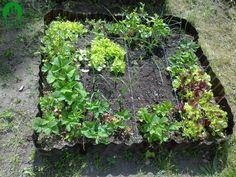 Warzywne kwadraty (square foot garden)