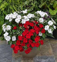 Mix SunPatiens with other annuals, like Euphorbia Compact White,for eye-catching color and contrast.