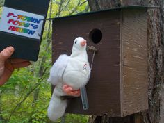 Peace bird loves this Geocache!