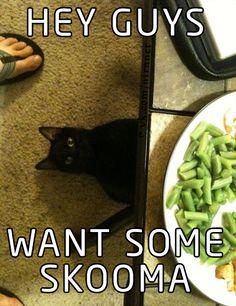 Elder Scrolls skooma cat