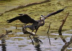 calumet wetlands | Little Calumet River Wetland - Highland, Indiana