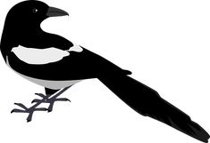 px magpie pic: Full HD Pictures by Pittman Bishop Free Clipart Images, Vector Free, Cliparts Free, Full Hd Pictures, Bird Clipart, Paper Birds, Wire Art, Paper Background, Vector Graphics