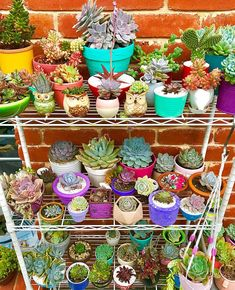 Are you looking for ideas for your plants? Take a look at these stunning succulent collections and get your inspiration! Succulent Gardening, Cacti And Succulents, Planting Succulents, Cactus Plants, Garden Plants, Indoor Plants, House Plants, Planting Flowers, Deco Cactus