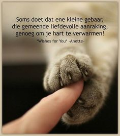 """""""Sometimes that little gesture makes that loving touch enough to warm your heart. Beautiful Lyrics, Beautiful Words, Cat Quotes, Animal Quotes, Cat Paws, Dog Cat, Animals And Pets, Cute Animals, Qoutes About Love"""
