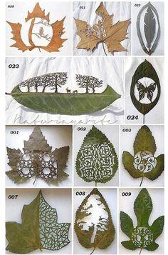 Amazing leaf art