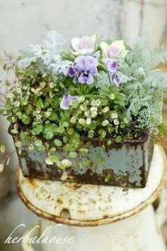 Pansy planter