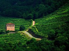 "Camino de Santiago - this site even has the wine tasting along the ""Way of Saint James"""