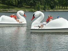 Swan paddle boats at Kensington Metropark