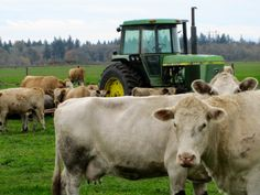 a john deere and cows in rural Willamette Valley, Oregon...looks like a pic i might have on my wall:)