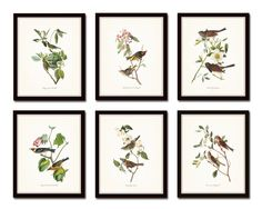 Vintage Audubon Print Set No. 1 - Canvas Art Prints This print set features timeless Audubon bird studies which have been digitally restored and added to a lightly tinted background which enhances the