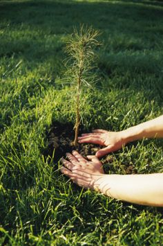 Planting trees.  I've done it since childhood and plan to continue doing it the rest of my life.