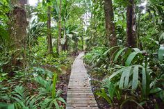 Experience the tropical rainforests of Tortuguero National Park on an early morning hike along the forest floor