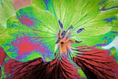 Nieuw in mijn Werk aan de Muur shop: Close up van een geranium