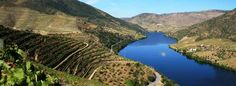 Port's journey begins far up the Douro river.