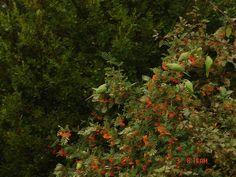beautifull birds in amstelveen, parrots