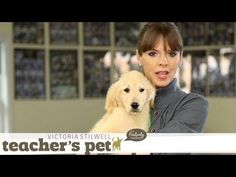Follow eHow Pets for regular tips from Victoria Stilwell and more: http://www.youtube.com/subscription_center?add_user=ehowpets Habituation is all about getting your dog used to different experiences. Puppies need to get used to being held, walking on different types of surfaces and being at various heights. Today, I'm going to show you how to make this a pleasant learning experience for your puppy. In Teacher's Pet, Victoria Stilwell shows you how to employ her Positively Method to train…