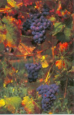 wine country in california photo: Wine Country WineCountry2.jpg