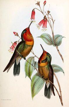 Olímpia Reis Resque: Um galante passarinho!