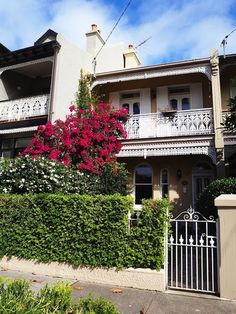 Terraced houses of Paddington | Sydney's Eastern Suburbs