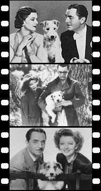The Official Fan Site for Asta the Dog - The Classic Hollywood movie dog that starred in The Awful Truth, Topper Takes A Trip, Bringing Up Baby, and The Thin Man movies. Wirehaired Fox Terrier, Fox Terriers, Wire Fox Terrier, Thin Man Movies, Old Movies, Really Cute Dogs, I Love Dogs, Cute Dog Pictures, Dog Photos