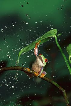 very own nature's umbrella!!!