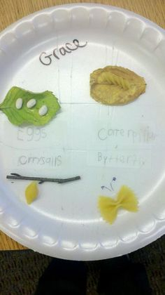 Butterfly Life Cycle Project with noodles... Love!