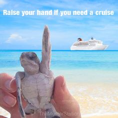need a vacation meme - Yahoo Image Search Results Vacation Meme, Vacation Quotes, Need A Vacation, Great Vacations, Travel Quotes, Family Vacations, Cruise Tips, Cruise Travel, Cruise Vacation