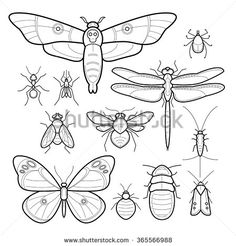 Insects butterfly, moth, dragonfly, bee, fly, moths, cockroaches, bedbugs, mites, ants, mosquitoes, silverfish. Set of vector images. Collection in modern style mono line. Black and white.