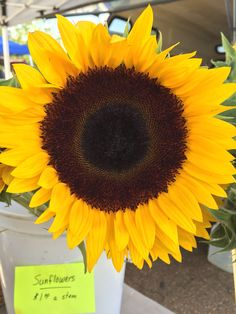 Sunflower from Renner Gardens. Ruston Farmers Market