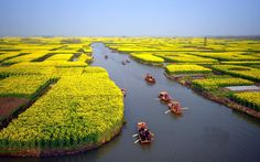 Bing fotos: Tourists take boats as they visit an expanse of flowering cole fields near Xinghua city, east China's Jiangsu province (© Wang Kaicheng/Xinhua Press/Corbis) Places Around The World, The Places Youll Go, Travel Around The World, Places To See, Around The Worlds, Beautiful World, Beautiful Places, Foto Nature, China Travel