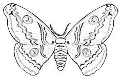 FARFALLA DA COLORARE | ... animali da colorare..farfalla..disegno farfalle da colorare in