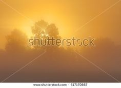 Amazing morning fog. Location of this misty field is in Konuvere. Estonia. Shutterstock contributor.