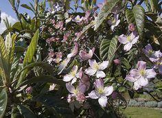 Marre Frédéric - Rustica - Jardin Globe Planter