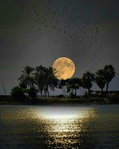 """""""She used to tell me that a full moon was when mysterious things happen and wishes come true. Moon Images, Moon Photos, Full Moon Pictures, Shoot The Moon, Moon Photography, Good Night Moon, Beautiful Moon, Moon Art, Nature Pictures"""