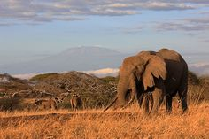 Rare Roan, Ellies and Kili - quintessential Kenya